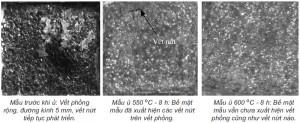 Hình 5. Bề mặt các mẫu (kích thước 1x1cm), sau khi ngâm trong dung dịch H2SO4 pH2
