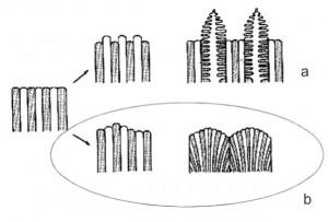 Hình 1. Những dạng không ổn định của mặt phân cách cùng tinh