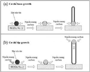 Hình 1. Mô tả cơ chế hình thành sợi nano cacbon sử dụng hạt xúc tác trên các đế vật liệu: (a) base-growth và (b) tip-growth
